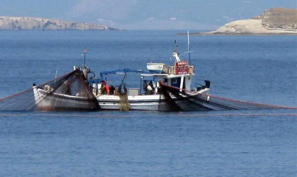 Έπιασαν «θηρίο» που ζυγίζει 85 κιλά - Δεν το πίστευαν οι ψαράδες