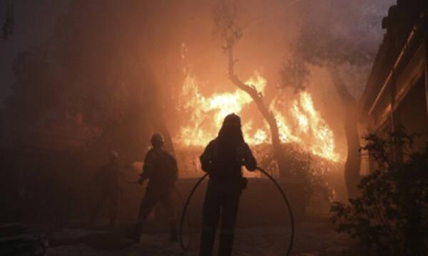 ΠΑΟΚ: «Οι σκέψεις μας είναι σε όλους όσους δοκιμάζονται από τις πυρκαγιές» (photos)