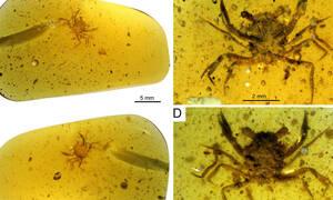 Αυτό είναι το αρχαιότερο καβούρι του κόσμου - Απολίθωμα από την εποχή των δεινοσαύρων